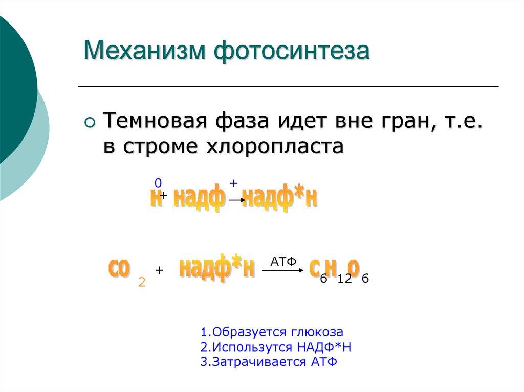 фотосинтез механизм процесса моменту