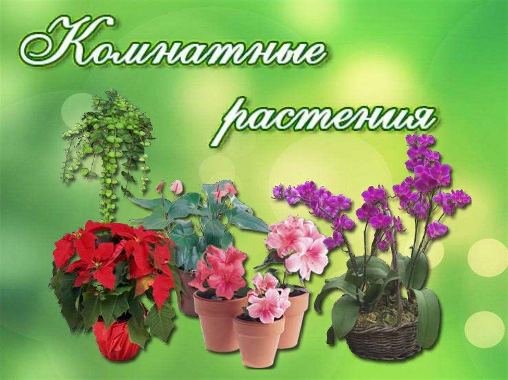 Картинки для презентации комнатные цветы