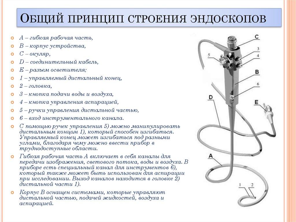 Строение позвоночника человека фото с описанием костей как воткнуть