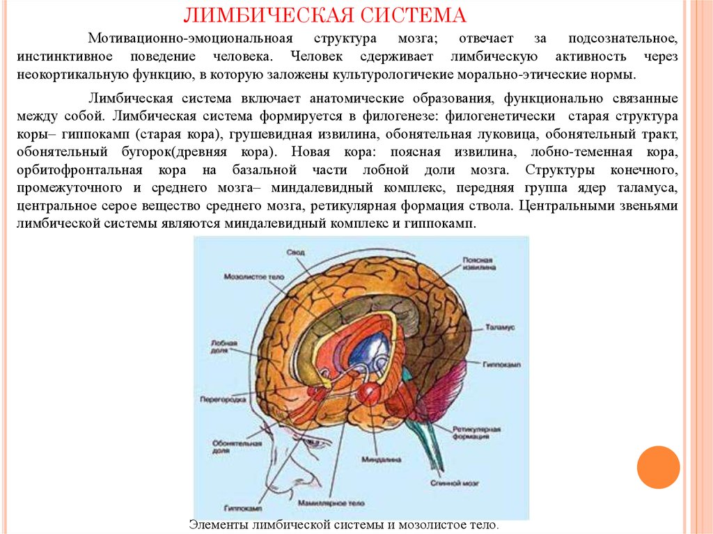 Общая структурно функциональная девушка модель работы головного мозга как субстрата найти на работу девушку