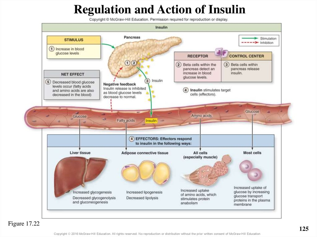 Regulation and Action of Insulin