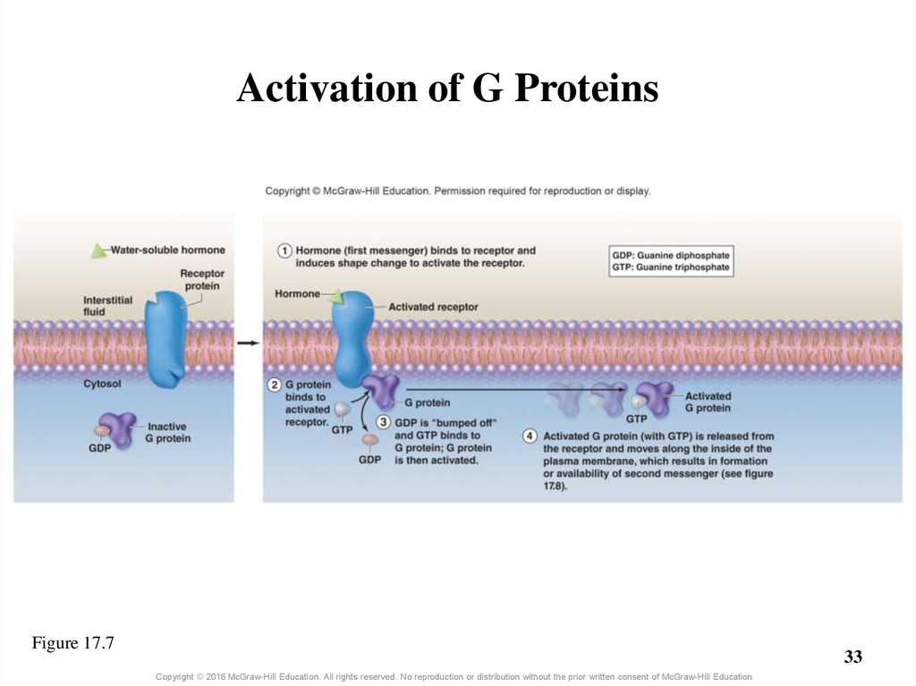 Activation of G Proteins