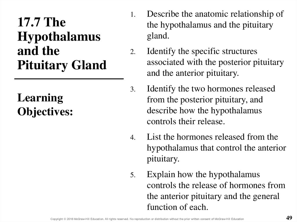 17.7 The Hypothalamus and the Pituitary Gland
