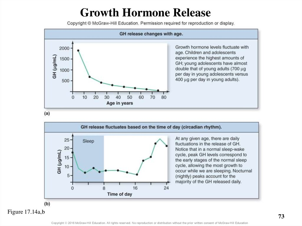 Growth Hormone Release