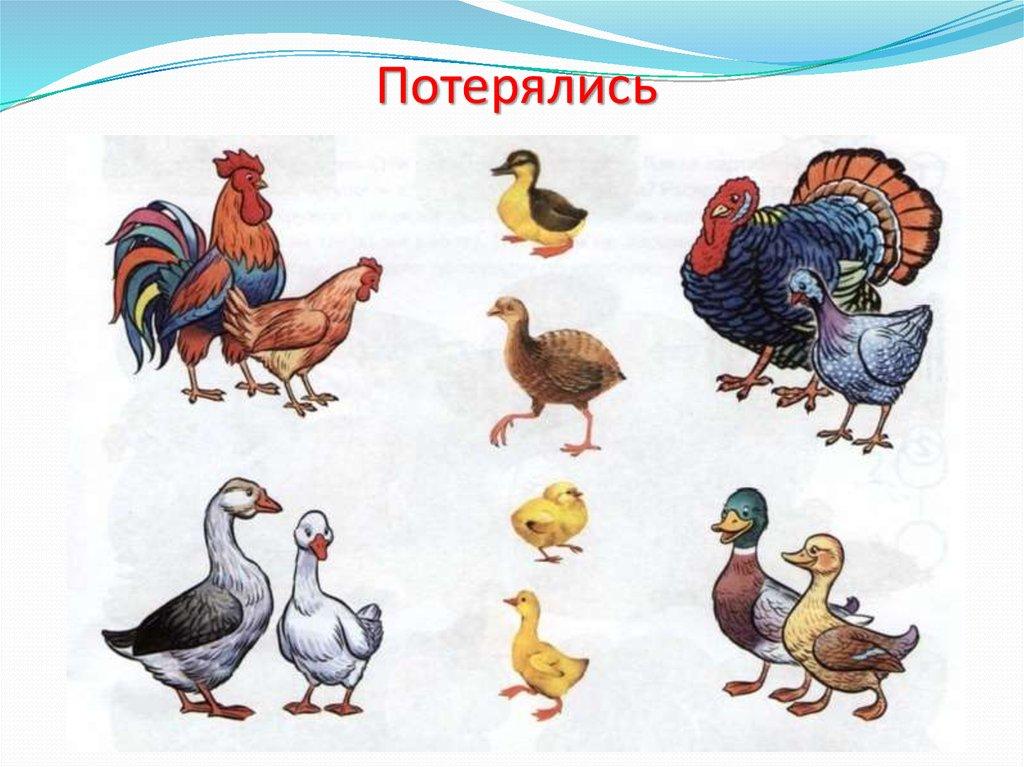 Птицы животные и их детеныши картинки для детей