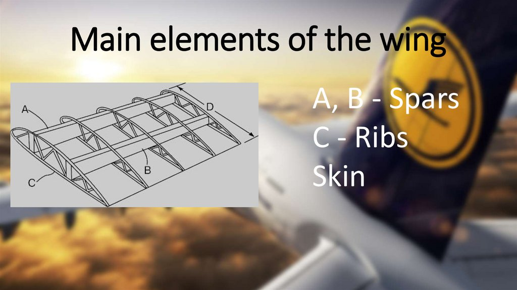 Main elements of the wing