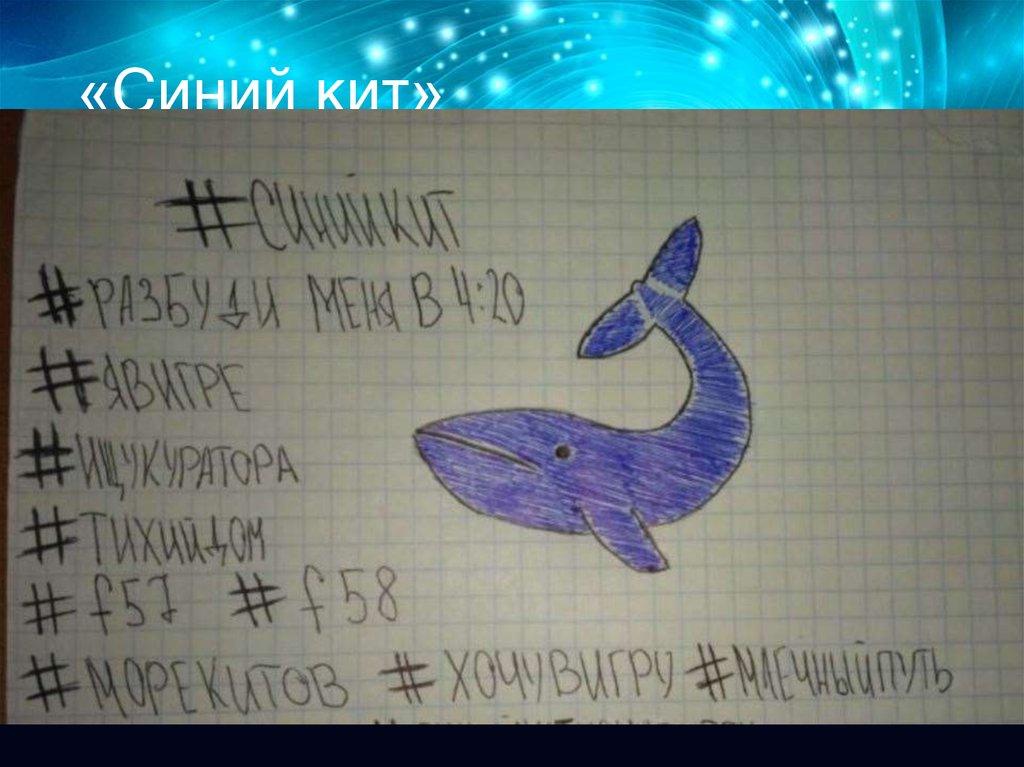 Синий кит тихий дон картинки