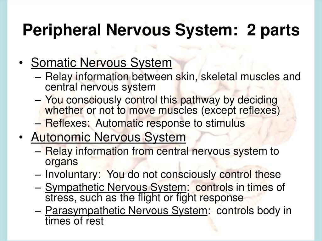 Peripheral Nervous System: 2 parts